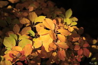 061124134130_view--yellow_autumn_of_koko-en