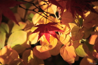 061124134210_view--lonesome_red_maple