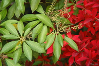 061124135950_view--red_and_green_of_xmas