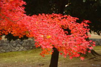 061125125038_view--nara_-_maple_of_todaji