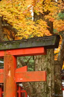 view--nara - corner of a shrine