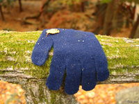 view--nara - single blue glove