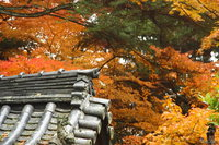 roof corner in autumn trees