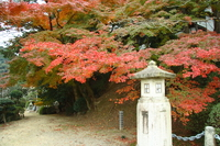 autumn of zentsu-ji