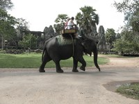 elephant in front of bayon temple Siem Reap, South East Asia, Cambodia, Asia