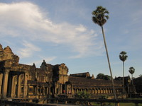 plam of angkor Phnom Penh, Siem Reap, South East Asia, Cambodia, Asia