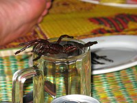 food--tarantula spider dessert Phnom Penh, South East Asia, Vietnam, Asia