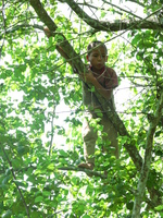 laos boy on tree Pakbeng, South East Asia, Laos, Asia