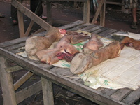 eating pig hooves in laos Pakbeng, South East Asia, Laos, Asia