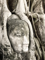 buddha head maha that Ayutthaya, Central Thailand, Thailand, Asia