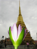 view--lotus temple Bangkok, South East Asia, Thailand, Asia