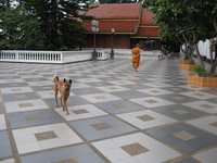 view--monk and dog in doi suthep Chiang Mai, South East Asia, Thailand, Asia
