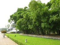 bamboo forest near ho chi minh mausoleum Hanoi, South East Asia, Vietnam, Asia