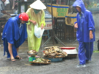 raining crab and dogs Hoi An, South East Asia, Vietnam, Asia