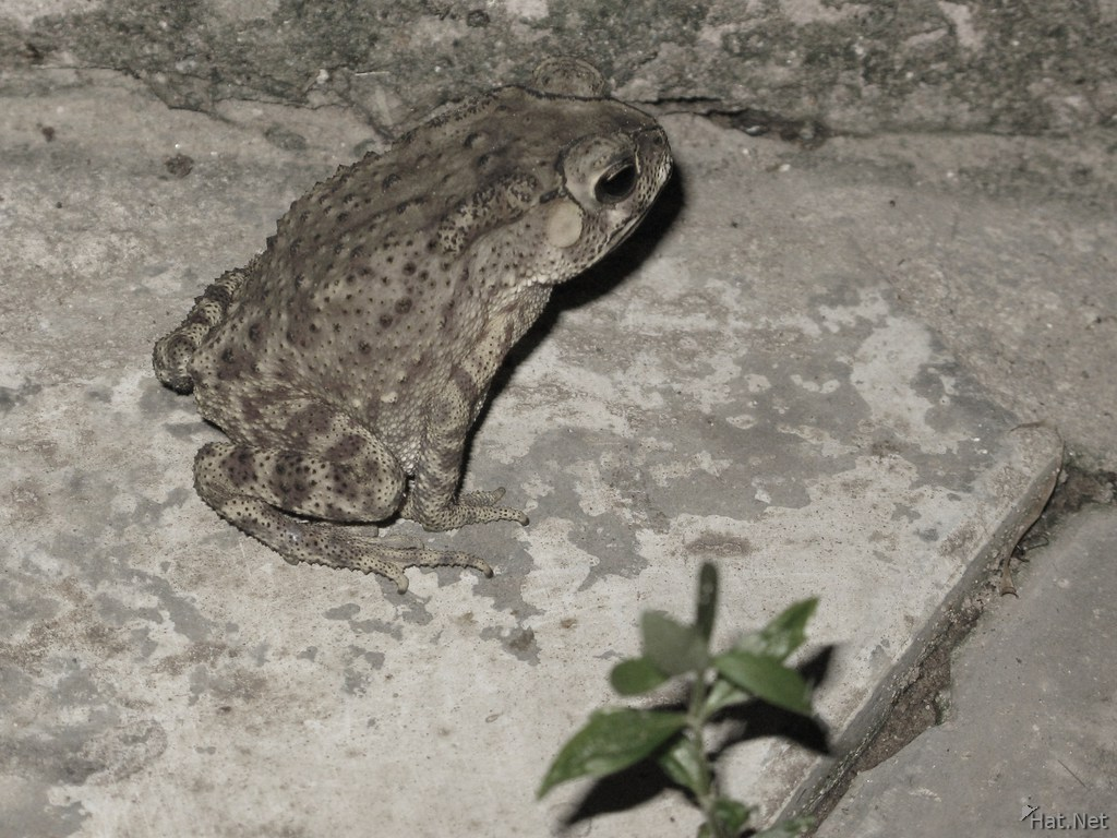 toad across national museum
