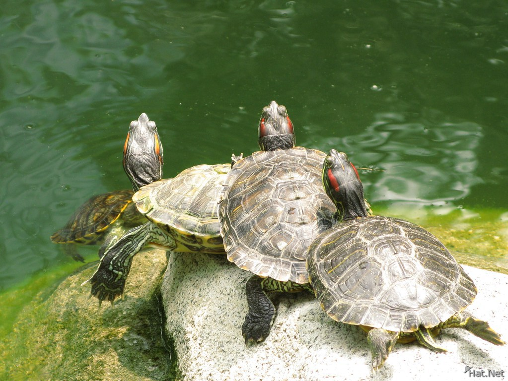 stack of turtles