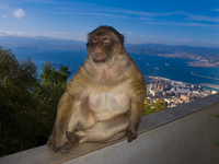 view--king of monkeys Tangier, Algeciras, Gibraltar, Mediterranean Coast, Cadiz, Morocco, Spain, Gibraltar, Africa, Europe