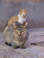view--cats near hotel amlal Ouarzazate, Interior, Morocco, Africa