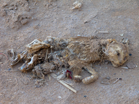 20101027153220_view--dead_cat_in_merzouga