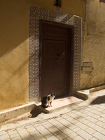 view--meknes cat Fez, Imperial City, Morocco, Africa
