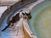 view--curious cat of medersa bou inaina Fez, Imperial City, Morocco, Africa