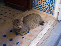 view--slacking cat Fez, Imperial City, Morocco, Africa