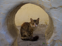 view--cat in keyhole Tangier, Mediterranean, Morocco, Africa