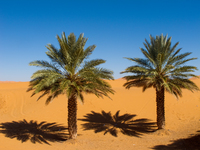 20101027113033_view--palm_trees_in_sahara