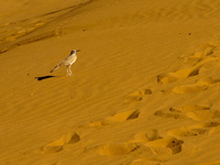 20101027141152_view--desert_bird