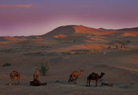 20101029172436_view--tired_camels
