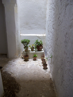 20101105151403_view--flowers_of_kasbah_museum