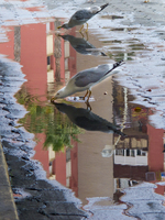 20101107152030_view--seagulls_of_la_linea