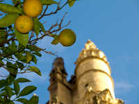 20101109155839_view--giralda_and_orange_yard