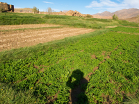 view--shadow on vegetable field Tomboctou, Todra Gorge, Morocco, Africa