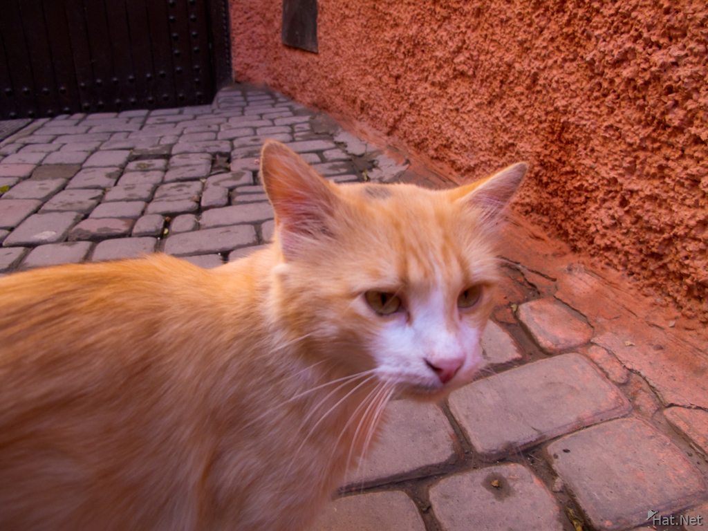 view--alley cat in marrakech