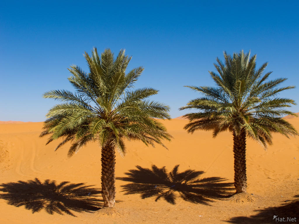 Sahara Desert Date Palm View sahara , desert : moorish empire