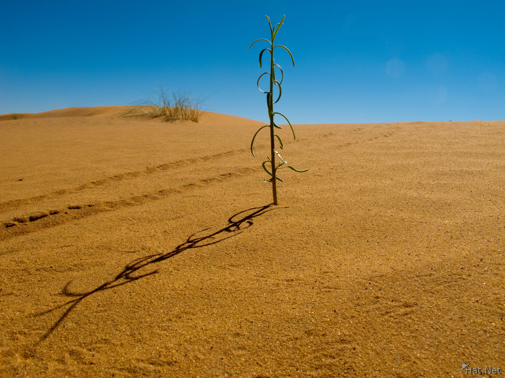 view--new life in sahara
