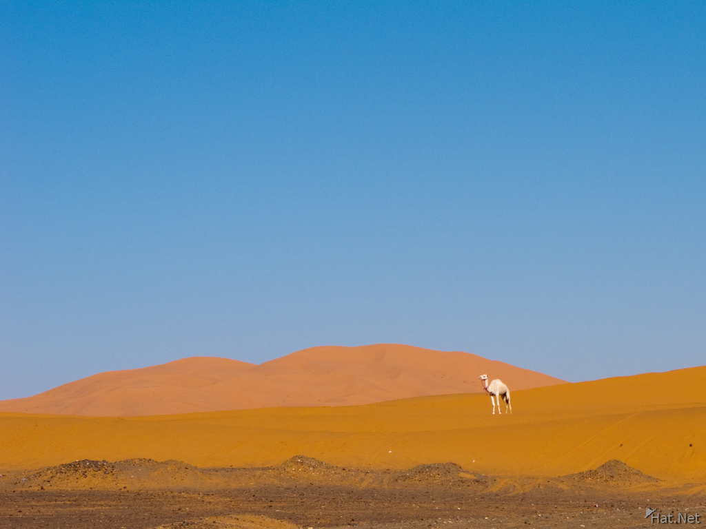 view--white camel