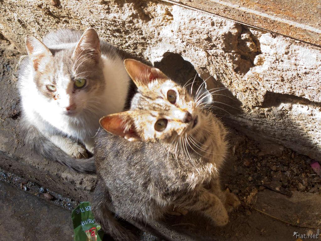 Fez Cats Moorish Empire